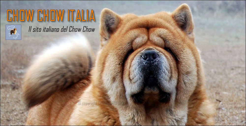 Chow Chow Italia