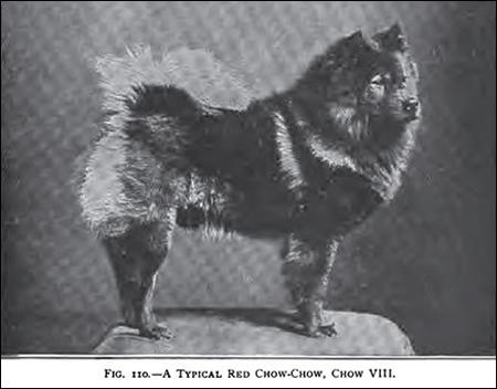 Chow VIII